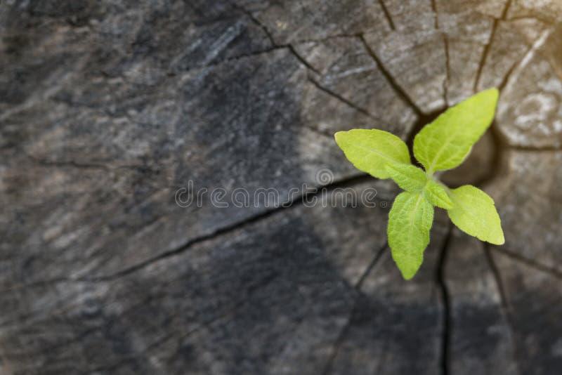 Planta que cresce na madeira na primavera fotografia de stock royalty free