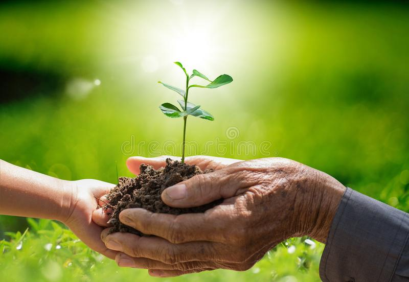 Planta que cresce no solo com a mão que guarda sobre o raio da luz solar e o fundo verde foto de stock royalty free
