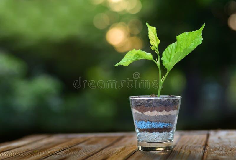 Planta que cresce no vidro de camadas do solo e do adubo em b verde imagem de stock royalty free