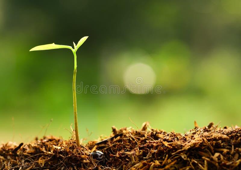 Planta que cresce sobre o ambiente verde imagem de stock