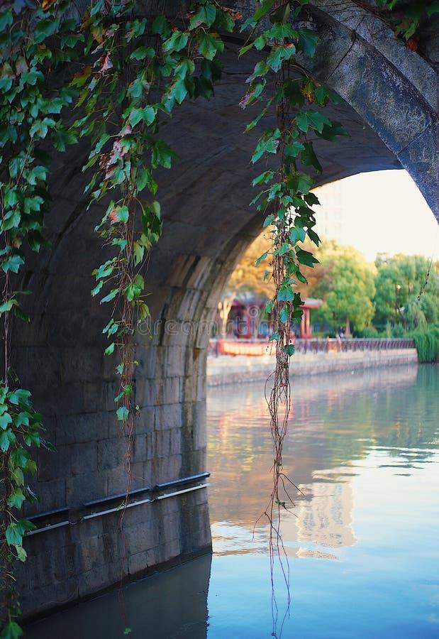 planta que pendura de uma ponte do arco imagem de stock royalty free