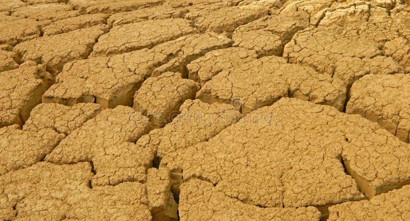 Planta rachada do deserto imagens de stock