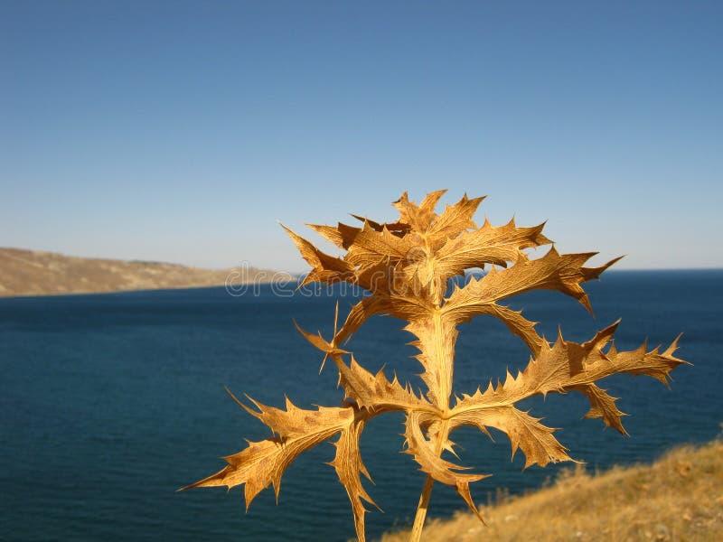 Planta seca com mar azul imagem de stock