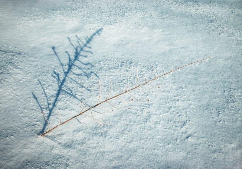 Planta seca de la sombra en nieve foto de archivo libre de regalías