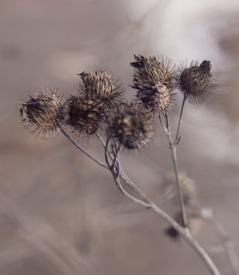 Planta secada fotografia de stock