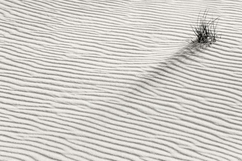 Planta sola en el desierto imagenes de archivo