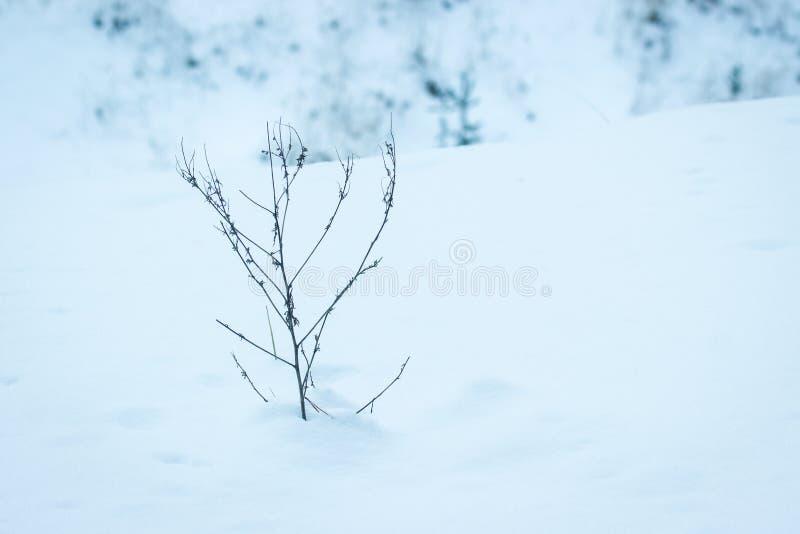 Planta sola en el desierto nevoso fotografía de archivo libre de regalías