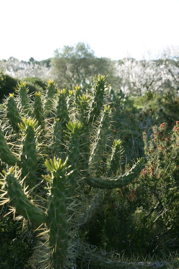 Planta spiky do cacto ao ar livre fotos de stock royalty free