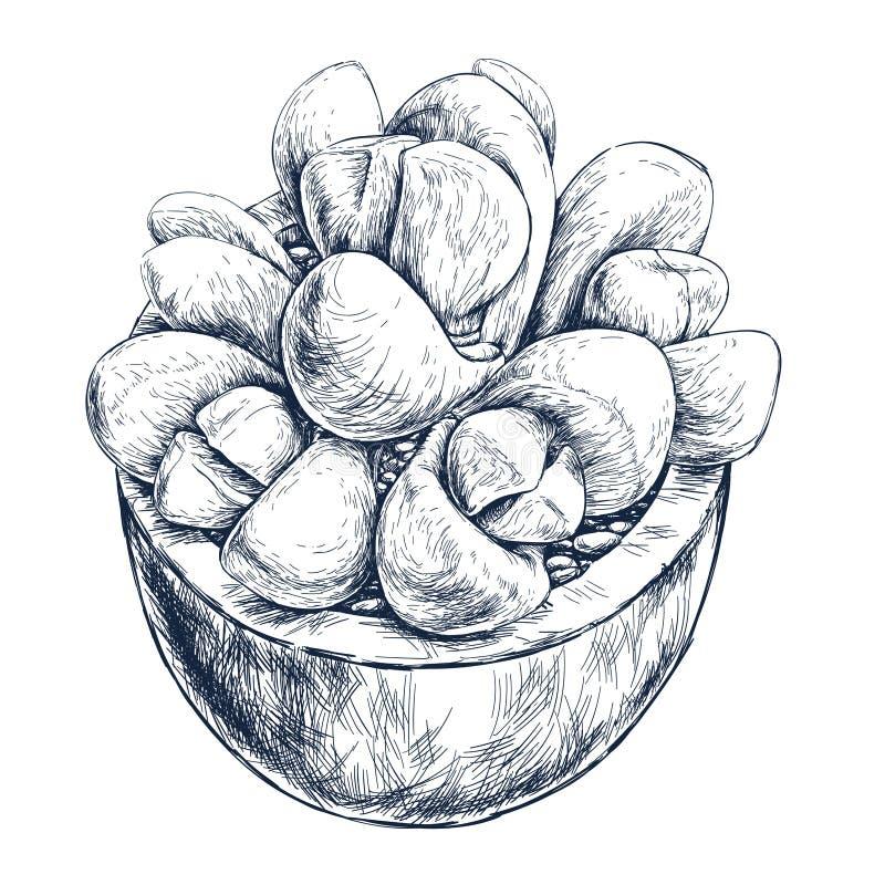 Planta suculenta en el pote ilustración del vector