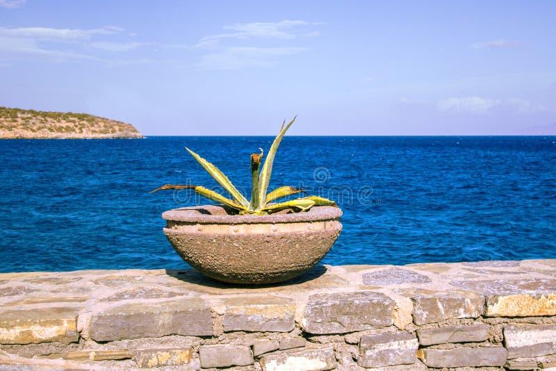 Planta suculenta en un pote concreto en el fondo del mar Mediterráneo Grecia, isla de Gramvousa Paisaje marítimo de Greec imagen de archivo