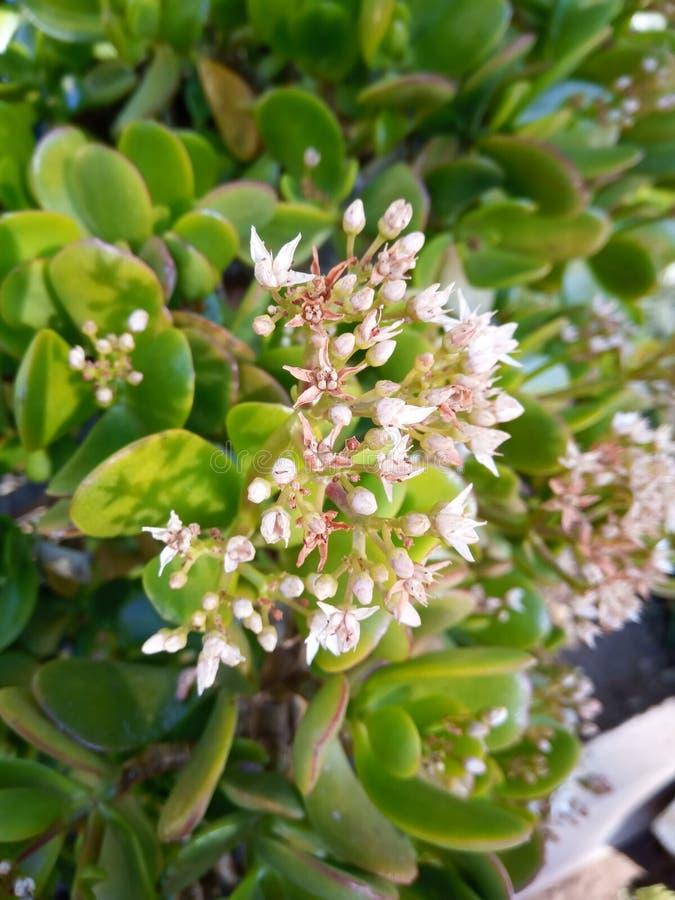 Planta suculenta floreciente imagenes de archivo