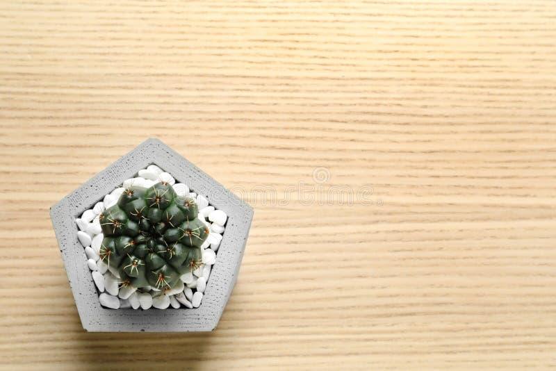 Planta suculenta hermosa en maceta elegante en el fondo de madera, visión superior Decoraci?n casera fotografía de archivo libre de regalías