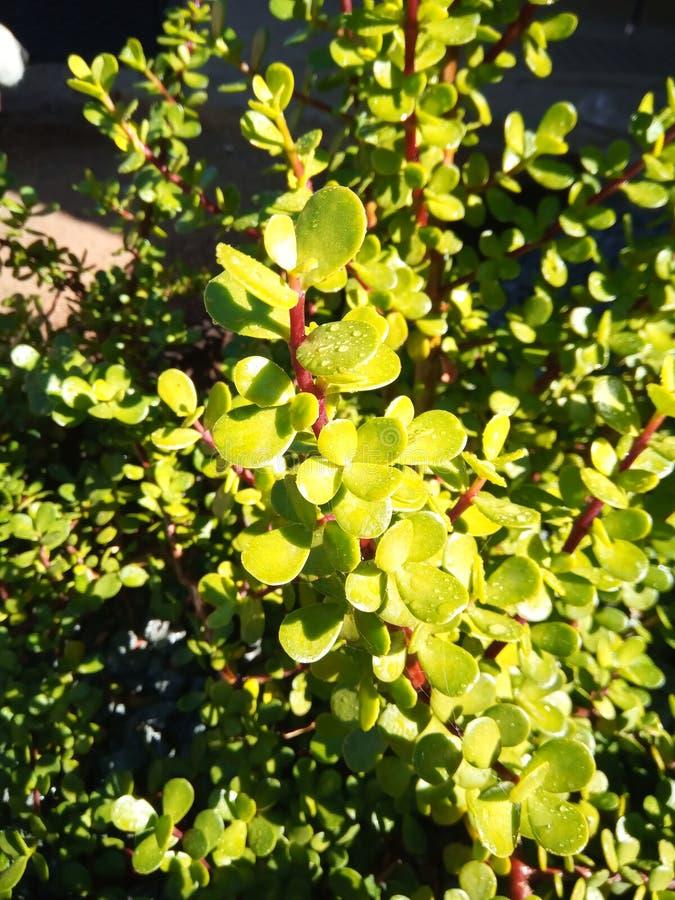 Planta suculenta mojada fotografía de archivo
