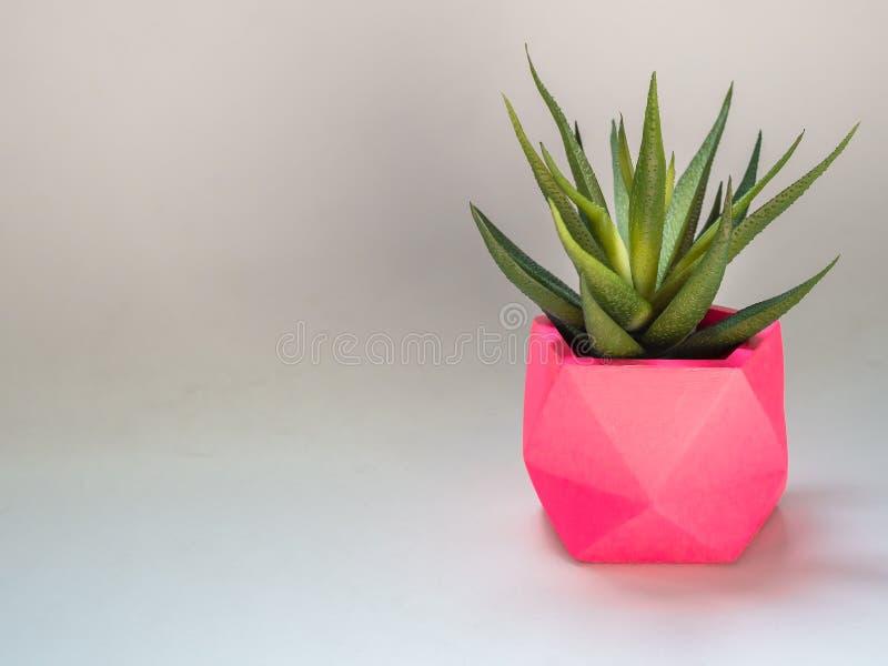 Planta suculenta verde en plantador concreto geométrico del rosa Potes concretos pintados coloridos para la decoración casera imagen de archivo