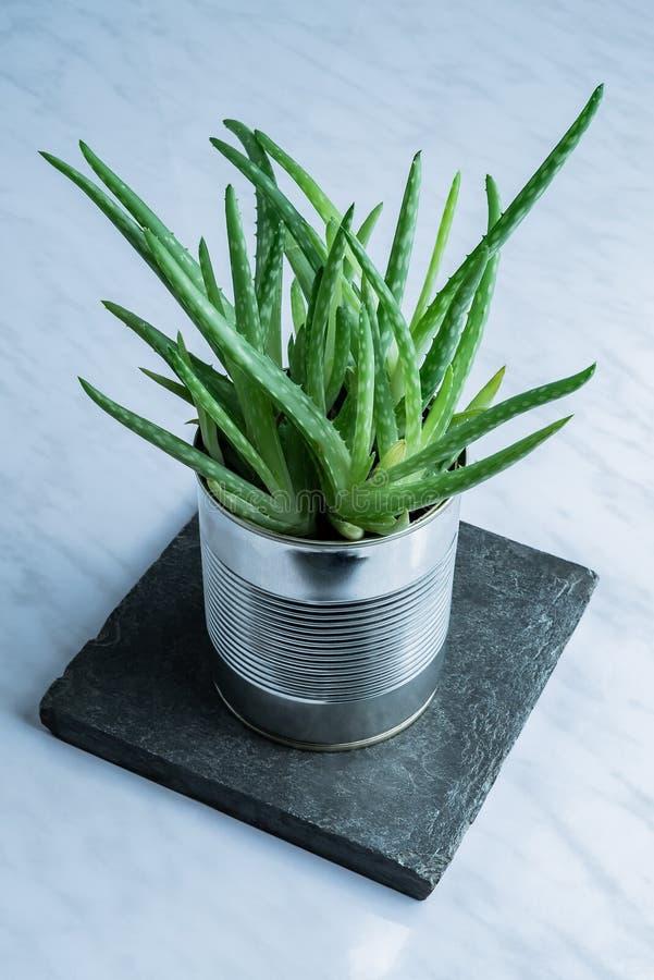 Planta suculento da medicina de vera do aloés moderno verde usada para o skincare natural em uma alternativa simples reciclada da imagens de stock