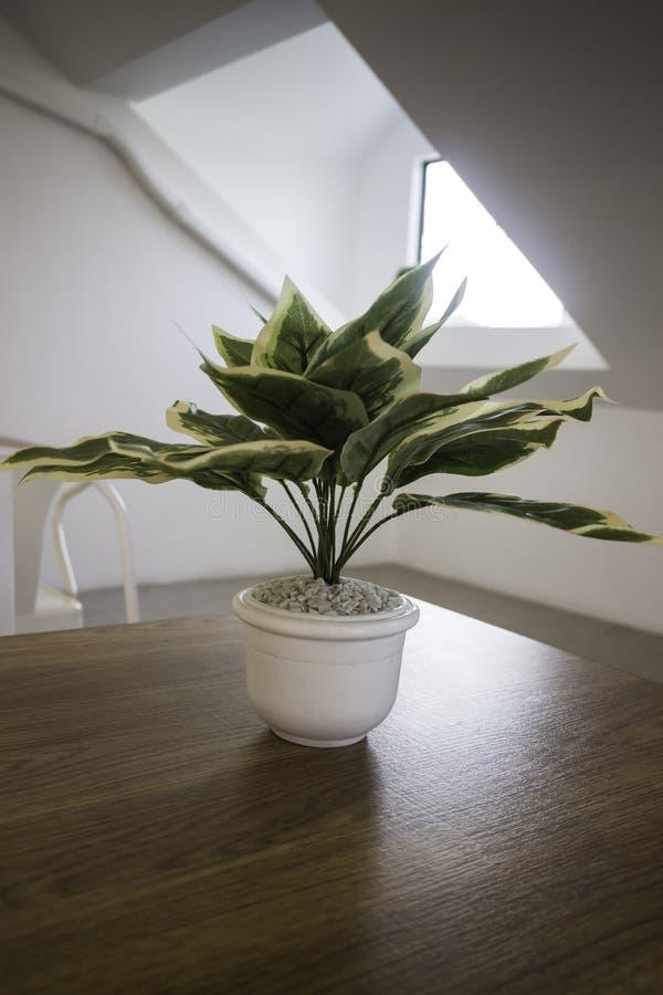 Planta suculento potdecorated na tabela de madeira fotografia de stock royalty free
