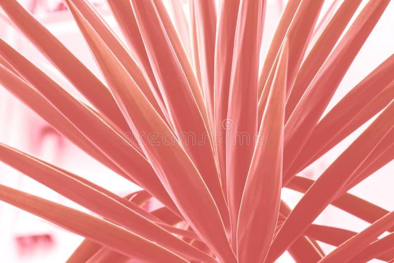 Planta suculento que cresce na cidade Tom coral fotografia de stock