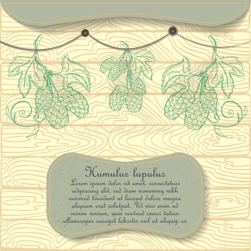 Planta tirada mão do lúpulo pendurada secando ilustração royalty free