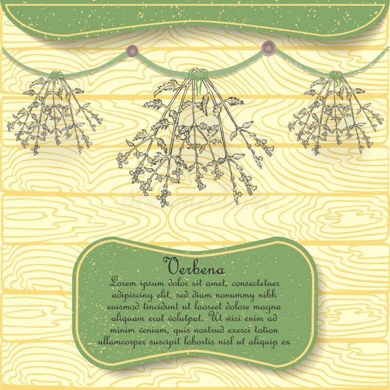 Planta tirada mão do Verbena pendurada secando ilustração royalty free