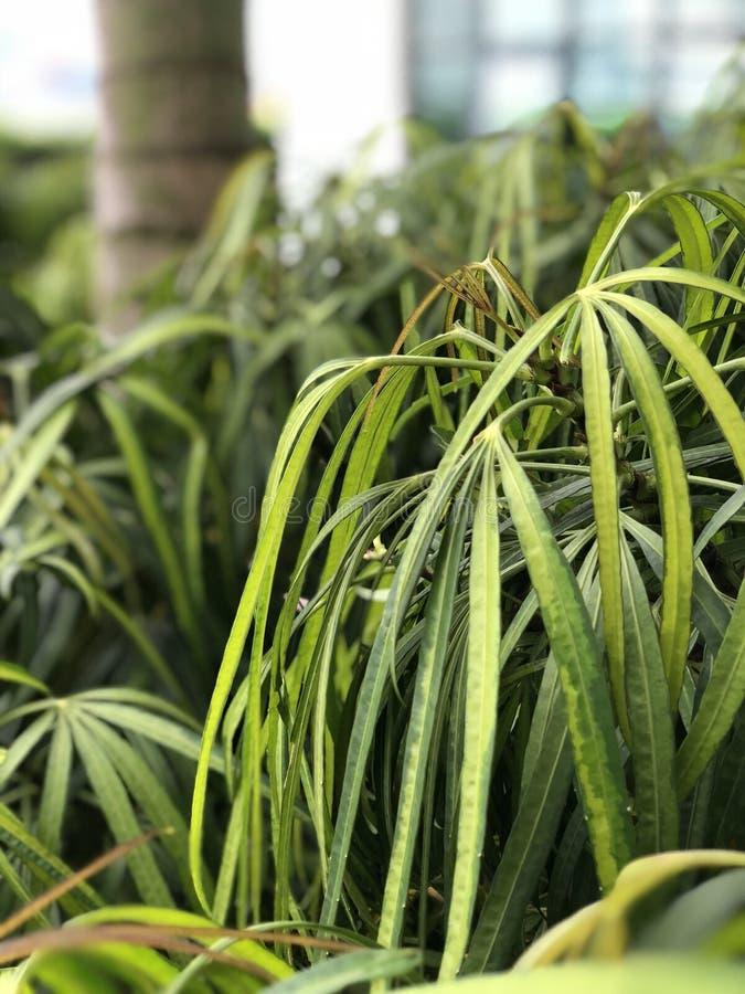 Planta tropical imagen de archivo libre de regalías