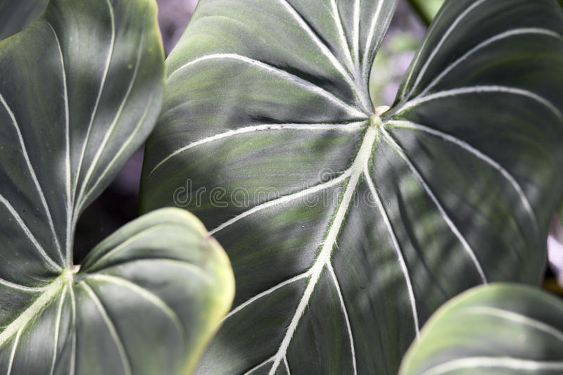 Planta tropical imagens de stock royalty free