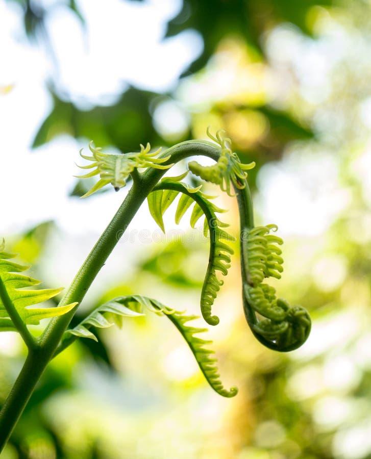 Planta tropical de brotamento foto de stock