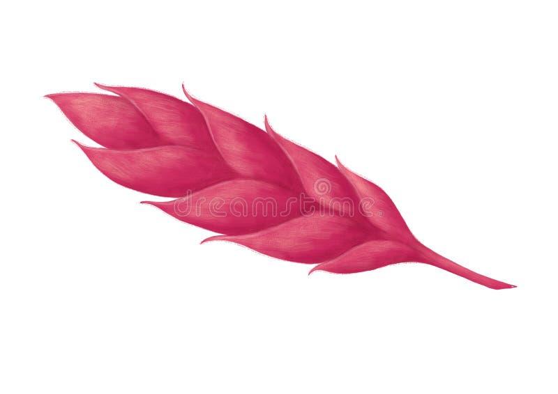 Planta tropical dibujada mano fotografía de archivo libre de regalías