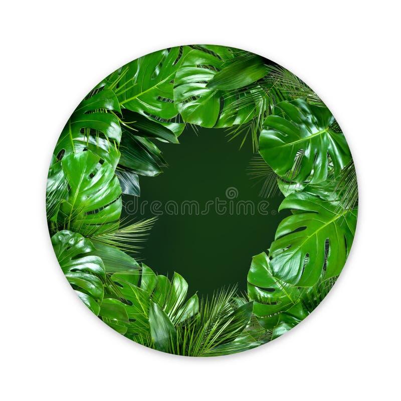 A planta tropical folheia forma do círculo com centro verde vazio no fundo branco fotografia de stock royalty free
