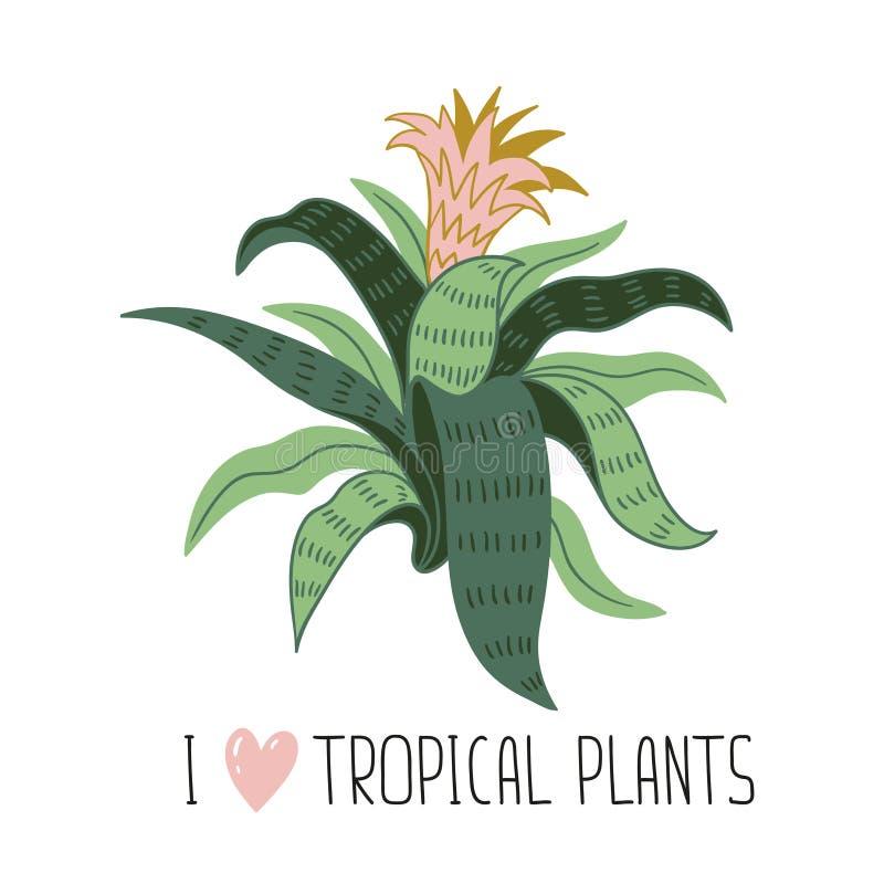 Planta tropical salvaje dibujada mano de la casa Ejemplo escandinavo del vector del estilo con aechmea ilustración del vector