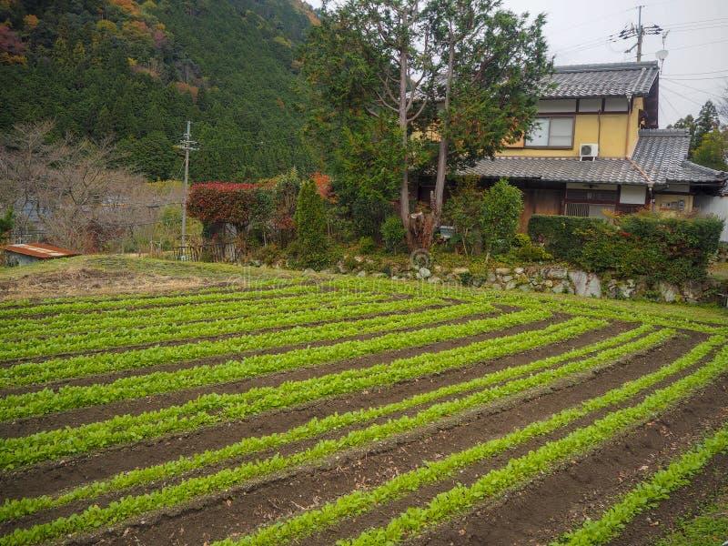 Planta vegetal ao lado da casa na zona rural de Quioto para antecedentes imagens de stock royalty free