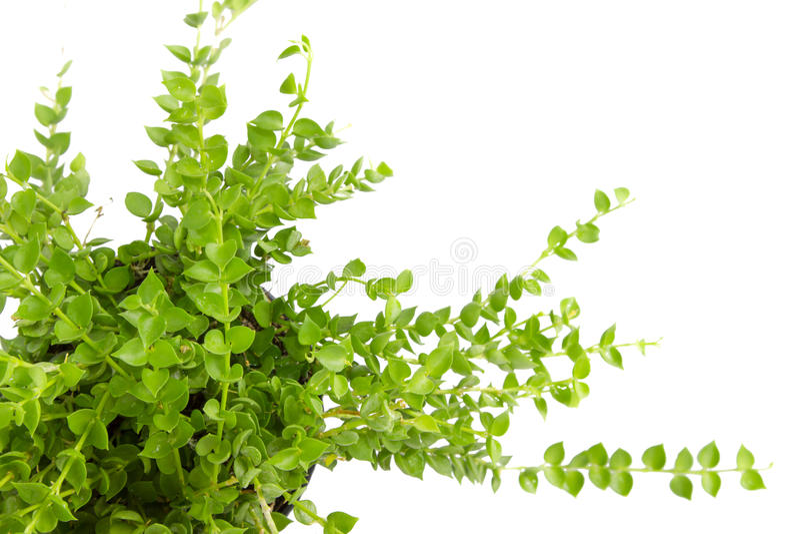 Planta verde fotografia de stock