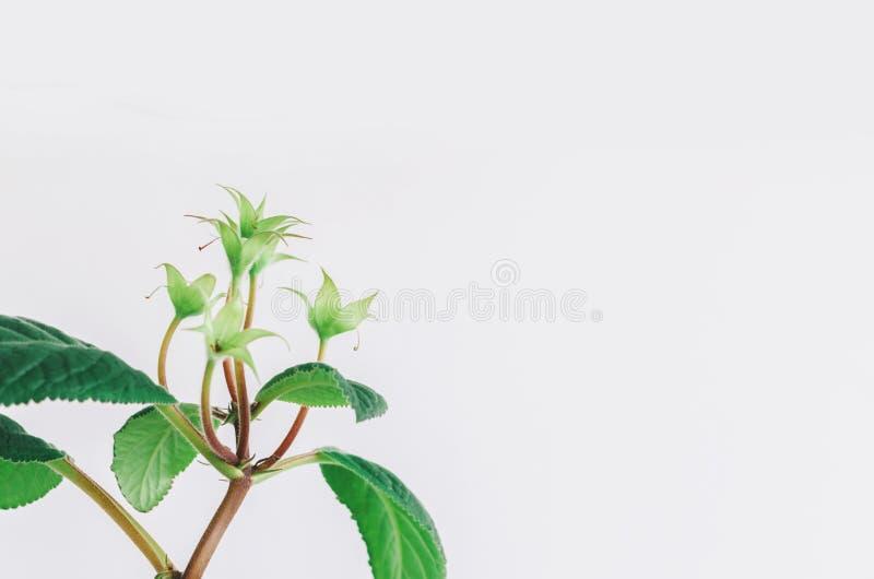 Planta verde casera foto de archivo libre de regalías