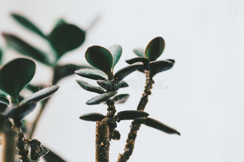 Planta verde casera imagenes de archivo