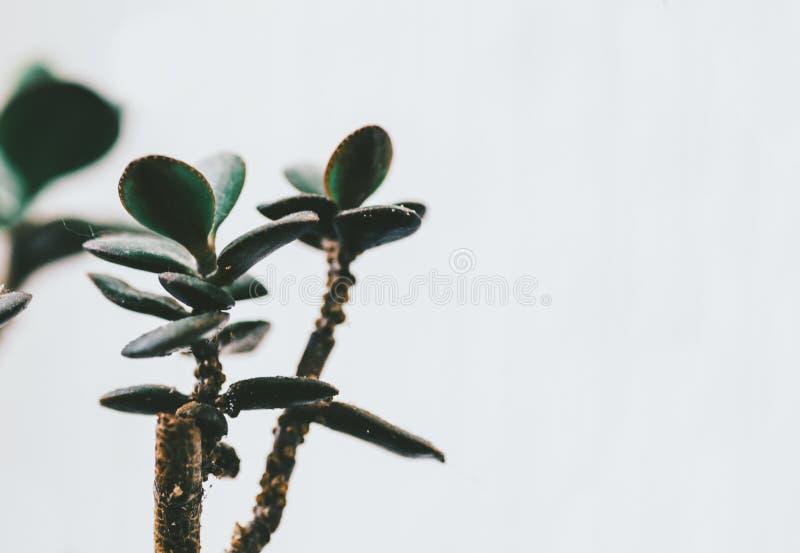 Planta verde casera imágenes de archivo libres de regalías