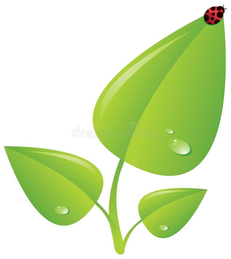 Planta verde com ladybug ilustração royalty free