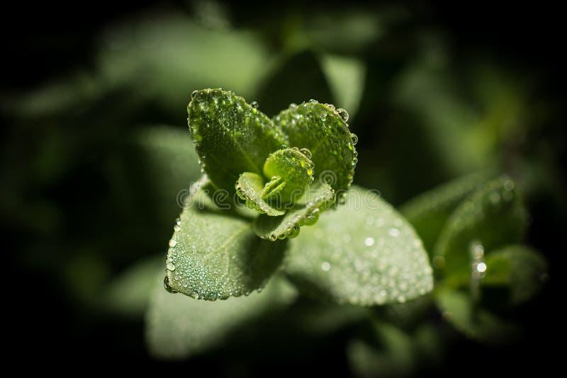 Planta verde con descensos fotos de archivo