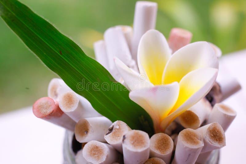 Planta verde con la flor y el cenicero Diga no a imagen de archivo