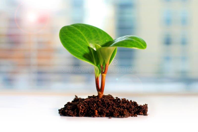 Planta verde Conceito novo da vida imagens de stock
