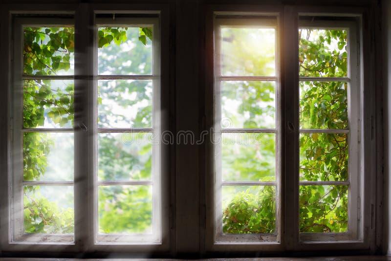 Planta verde contra a janela com raios do sol foto de stock