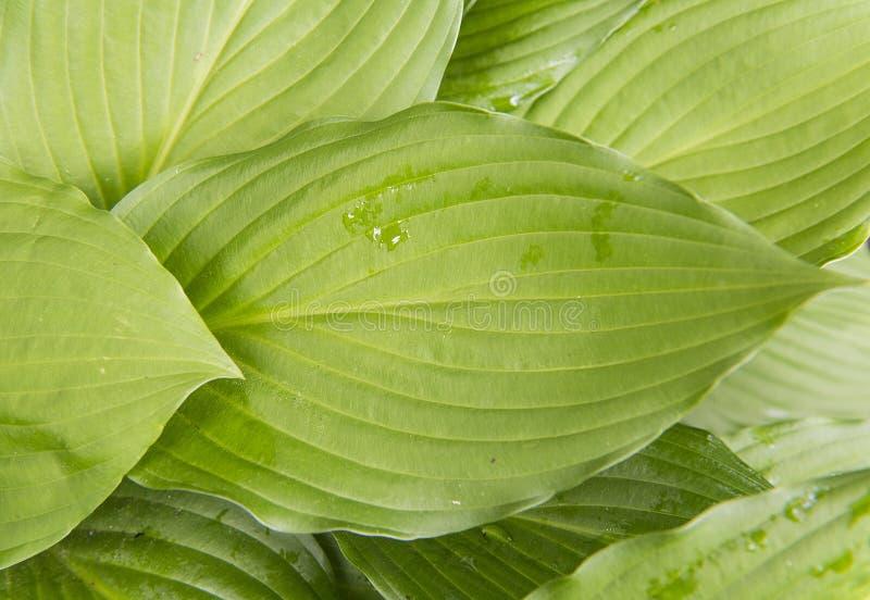 Planta verde da folha com pingos de chuva foto de stock royalty free