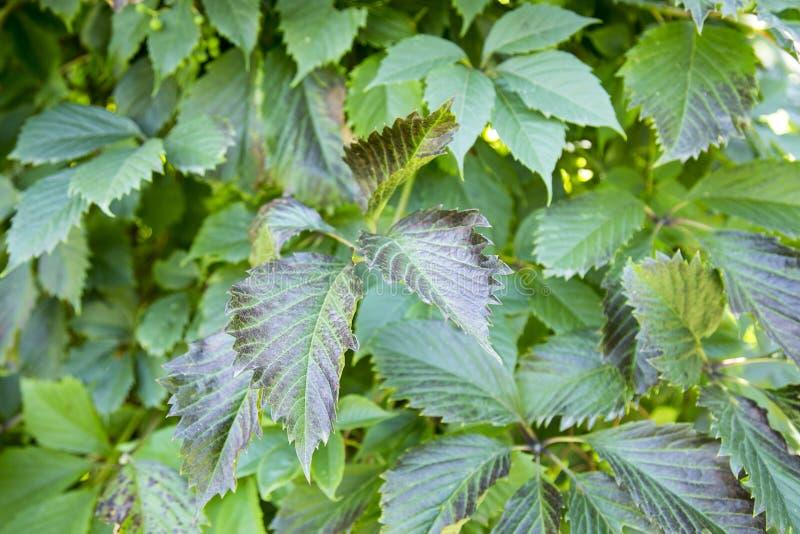 Planta verde de la hoja foto de archivo