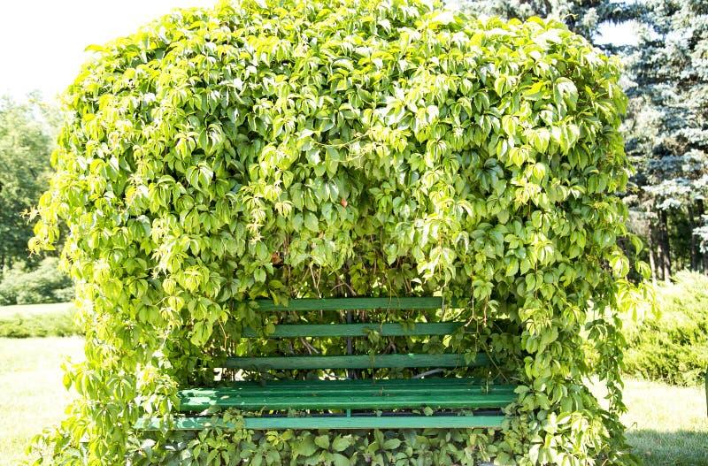 Planta verde de la hoja fotos de archivo