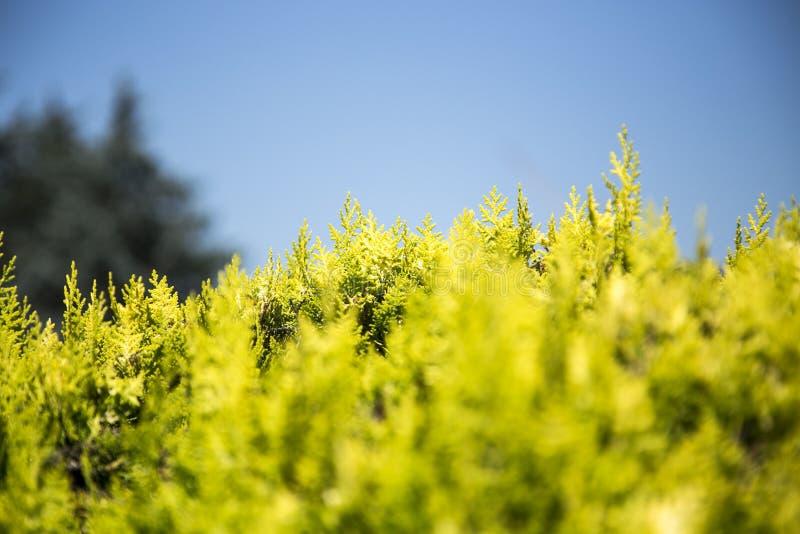 Planta verde de la hoja fotografía de archivo