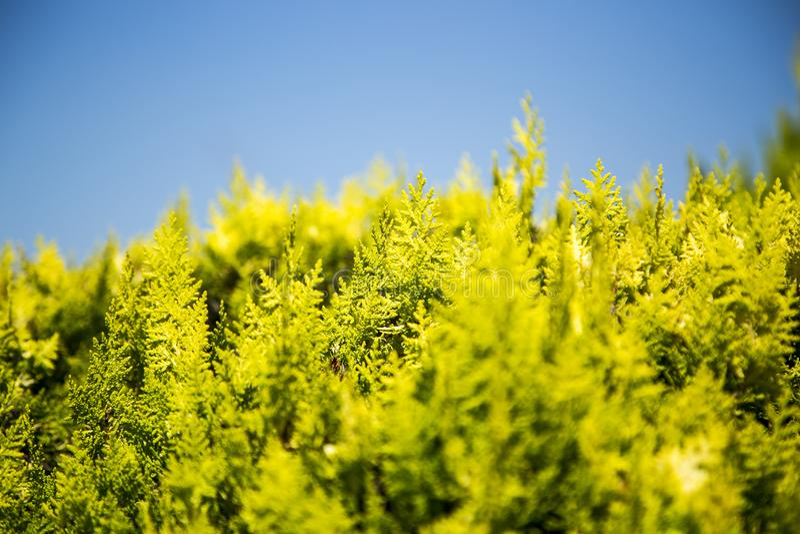 Planta verde de la hoja foto de archivo libre de regalías