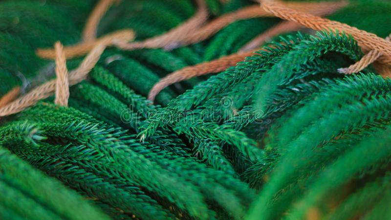 Planta verde de la naturaleza macra del tiro wallpaper fotos de archivo libres de regalías