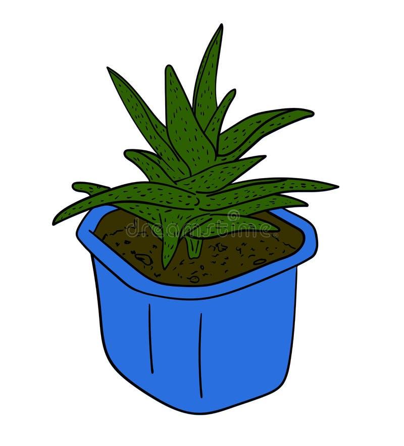 Planta verde decorativa del áloe en un pote azul aislado en el fondo blanco, dibujo pintado a mano del esquema libre illustration