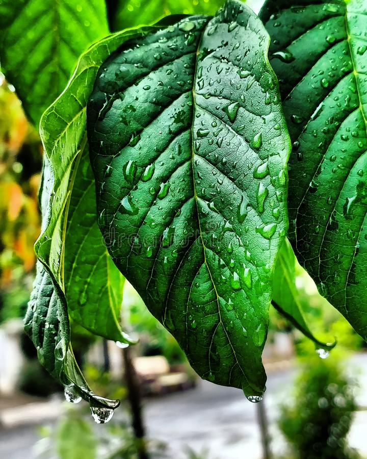 Planta verde del ?rbol fotografía de archivo libre de regalías