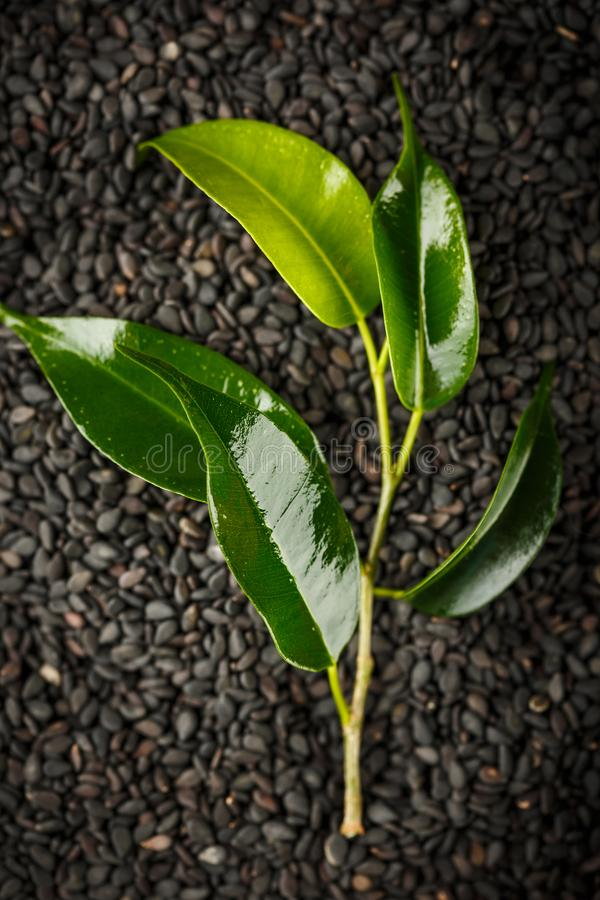 Planta verde do wiyh do fundo do zen fotos de stock royalty free