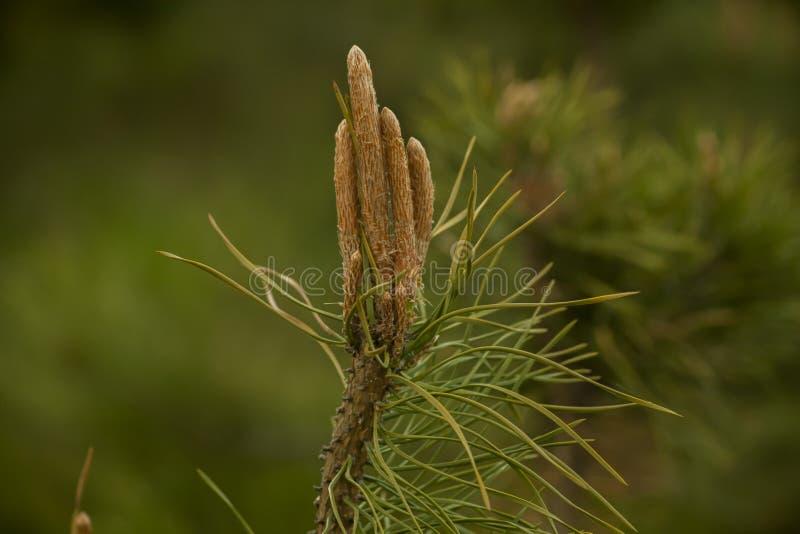 Planta verde e marrom fotografia de stock