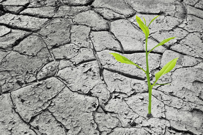 Download Planta verde imagem de stock. Imagem de arid, estéril - 29827343